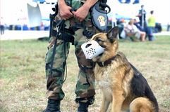 Soldat de l'armée américain et crabot de dispositif protecteur Image libre de droits