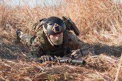 Soldat, der auf den Gebieten kriecht Lizenzfreie Stockfotos