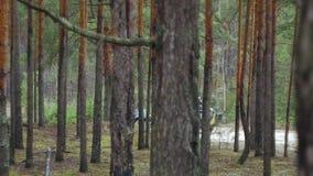 Soldater i kamouflage med stridvapen gör deras väg utanför skogen, med syftet av att fånga det, militären arkivfilmer