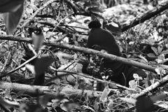 Soldater som siktar målet, och innehav som hans dolde gevär överfalla från bakhåll, arméprickskyttkamouflage i skog royaltyfri bild