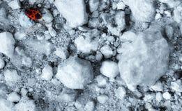 Soldato o insetto rosso dello scarabeo immagine stock