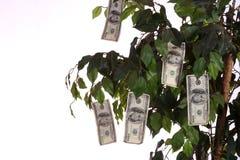Soldi che crescono su un albero Fotografia Stock Libera da Diritti