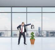 Soldi d'innaffiatura dell'uomo d'affari, crescita Immagini Stock