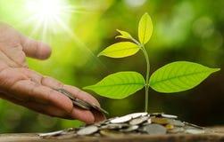 Soldi dare e di risparmio della mano dell'uomo d'affari al giovane albero Immagini Stock