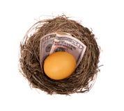 Soldi dell'uovo di nido Immagini Stock
