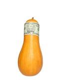 Soldi dello zucchino Immagine Stock Libera da Diritti