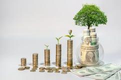 Soldi di risparmio di crescita di soldi L'albero superiore conia il concetto indicato dell'affare crescente fotografia stock libera da diritti