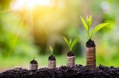Soldi di risparmio di crescita di soldi L'albero superiore conia il concetto indicato dell'affare crescente fotografia stock