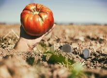 Soldi e mano sulla terra del raccolto immagini stock libere da diritti