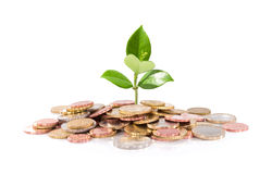 Soldi e pianta - nuovo affare di finanza Fotografie Stock Libere da Diritti