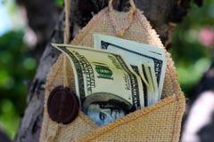 Soldi in una busta sull'albero Fotografie Stock Libere da Diritti