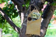 Soldi in una busta sull'albero Fotografia Stock