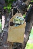 Soldi in una busta sull'albero Immagini Stock