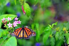Soldier butterfly in aviary Stock Photo