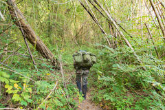 Soldier or chasseur walking through a forest with lush grass Stock Image
