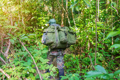 Soldier or chasseur walking through a forest with lush grass Stock Photography
