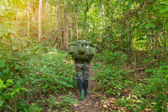 Soldier or chasseur walking through a forest with lush grass Royalty Free Stock Image