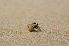Free Soldier Crab Royalty Free Stock Photography - 15793917