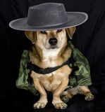 Soldier dog Stock Images