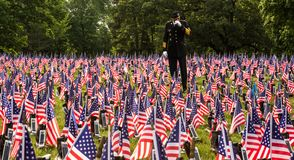 Soldier in field of flags royalty free stock images