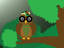 Soldier owl. The soldier owl is in the forest Stock Image