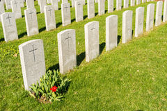 Soldier Tombs in Montreal Cemetery. With a red tulip in springtime stock images