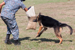 Soldiers from the K-9 dog unit Royalty Free Stock Photography