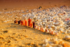 The soldiers of the ocean shells Royalty Free Stock Photography