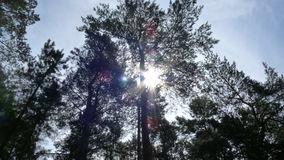 Sole attraverso gli alberi fotografia stock libera da diritti