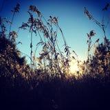 sole attraverso il fieno fotografie stock