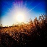 sole attraverso il fieno fotografie stock libere da diritti