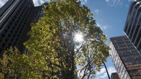 Sole attraverso le costruzioni moderne alte della corona verde dell'albero Fotografia Stock