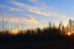 Sole brillante dietro gli alberi fotografia stock