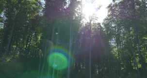 Sole brillante tramite le corone verdi delle latifoglie archivi video