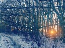 Sole degli alberi di inverno di tramonto Fotografia Stock Libera da Diritti