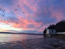Sole degli uccelli della rimessa per imbarcazioni della mosca di tramonto Immagine Stock