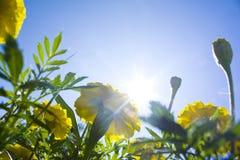 sole dei fiori immagine stock libera da diritti