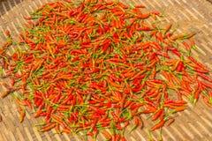 Sole del peperoncino rosso asciutto Immagini Stock