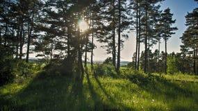 Sole del prato e dell'albero che splende attraverso gli alberi immagini stock