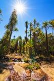 Sole dell'oasi di Isalo Immagini Stock