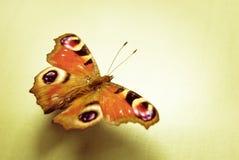 Sole della farfalla Fotografie Stock