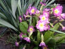 Sole della molla del fiore Fotografia Stock Libera da Diritti