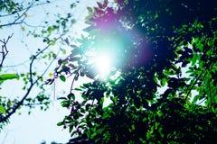 Sole delle foglie verdi di mattina Fotografia Stock Libera da Diritti