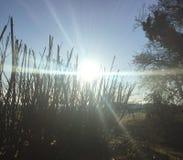 Sole di alba Fotografie Stock