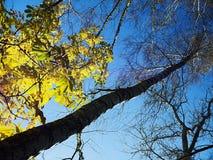 Sole di autunno di sera Immagine Stock Libera da Diritti