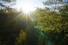 Sole di autunno fra gli alberi fotografia stock