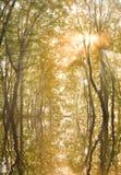 Sole di autunno nelle filiali di un albero fotografia stock