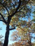 Sole di caduta attraverso l'albero Immagine Stock