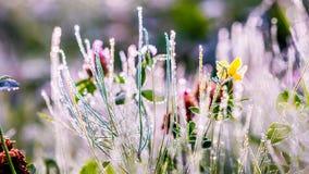 Sole di inverno dell'oro sulle foglie verdi recenti di autunno e sui fiori recenti Fotografia Stock