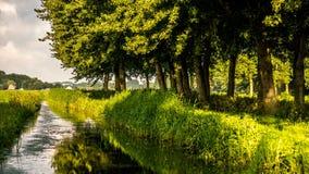 Sole di inverno dell'oro sulle foglie verdi recenti di autunno lungo il canale del prato Fotografia Stock
